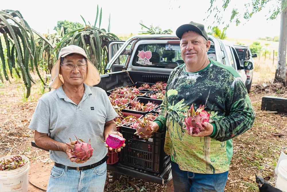 Plantação com centenas de pés de pitaias começou com uma muda ganhada