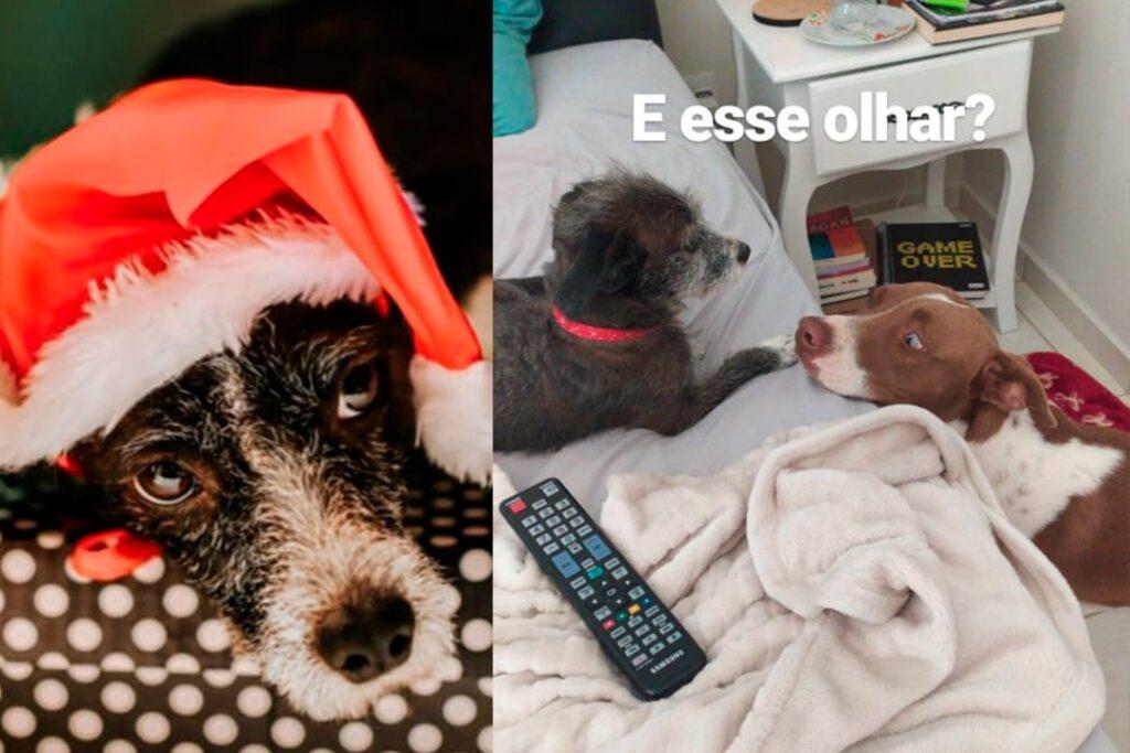 Tobias e Estela, cães desaparecidos no Parque das Grevilhas, são localizados