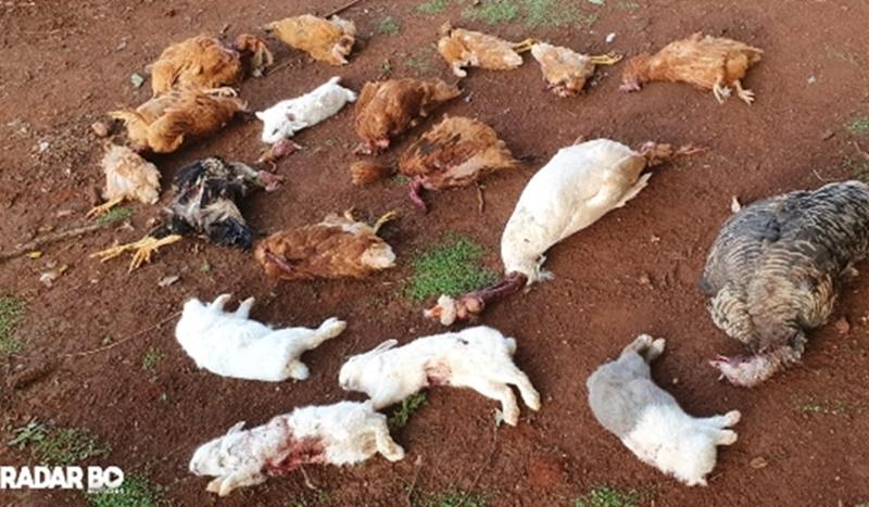 Animais são sacrificados em seminário de Toledo; não restou nada de sangue