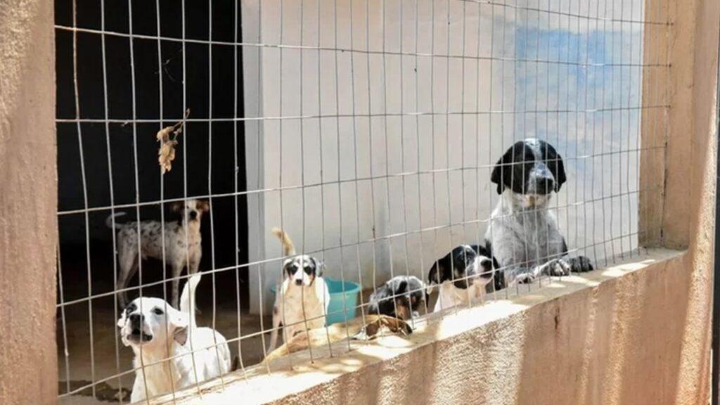 Umuarama: Saau precisa de doação de ração para cães e gatos que vivem no canil