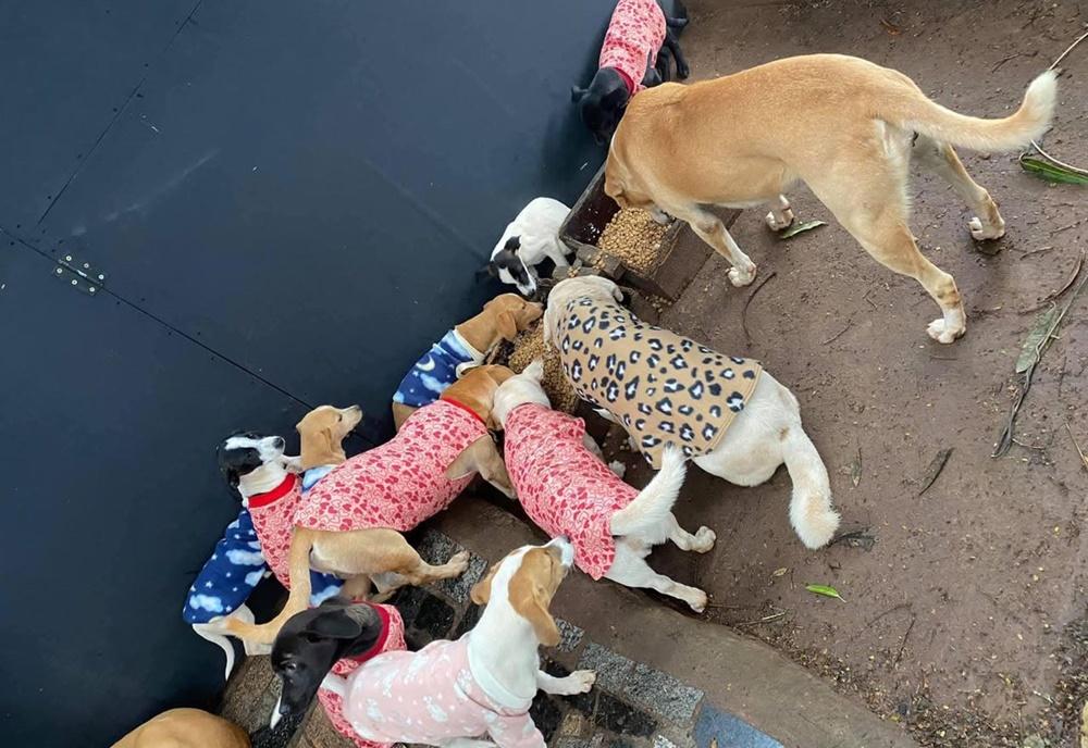 Moradoras de Umuarama pedem ajuda para fazer roupinhas para animais de rua
