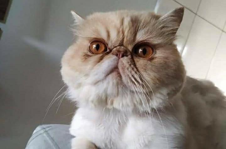 Jovem de Umuarama procura o gatinho Mel, que desapareceu no Jardim União