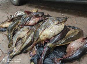 Dois homens são flagrados com 74 quilos de peixes nativos no Rio Paraná