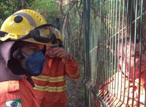 Bombeiros combatem incêndio em vegetação do Bosque do Índio