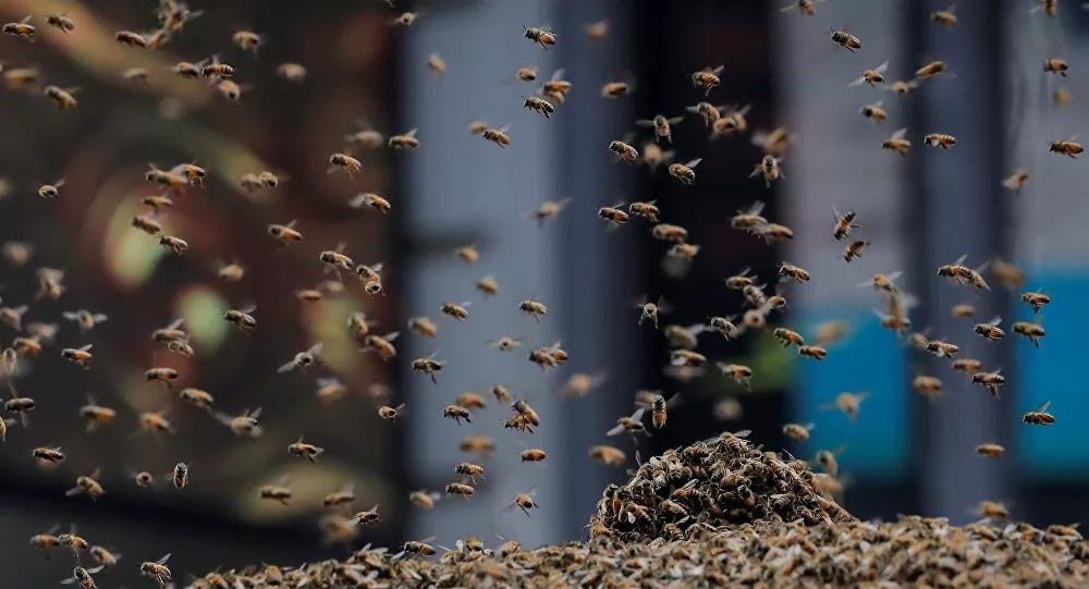 Operador de máquina morre após ser atacado por enxame de abelhas