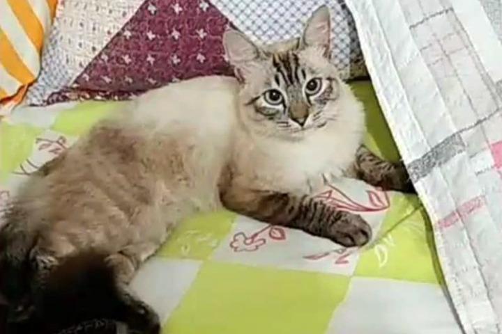 Gatinho Betto, que estava desaparecido, é localizado perto da Havan