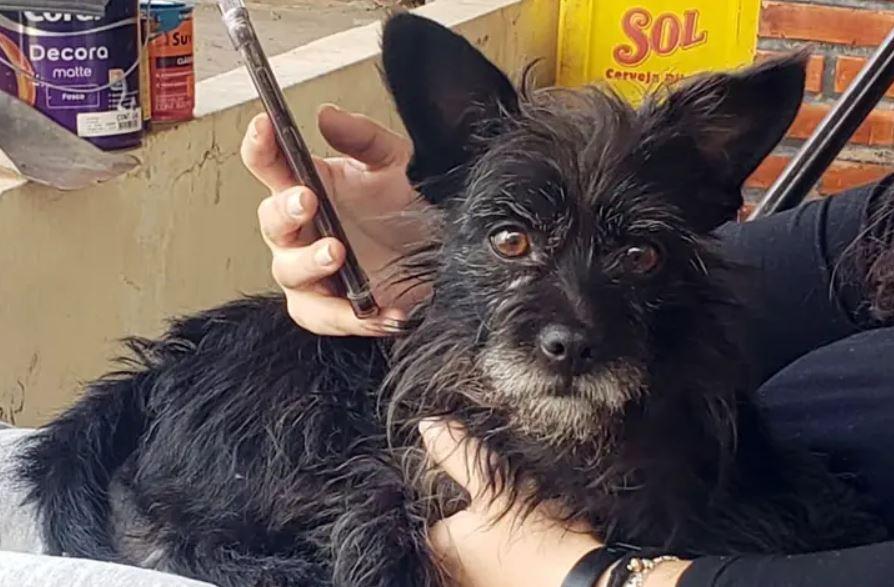 Após 11 dias de desparecimento, cachorrinha Frida é localizada e devolvida para tutora