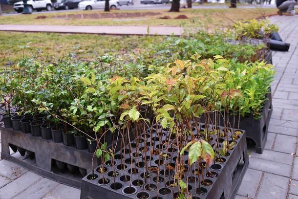 Prefeitura de Umuarama tem projeto de distribuição gratuita de mudas de árvores